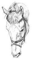 """"""",""""horsesandpony.4bb.ru"""