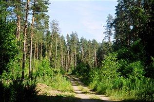 Леса Валдайского национального парка.