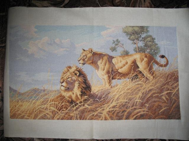 Африканские львы. мои работы.