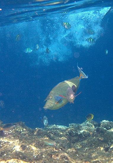 Вот первый раз снимала рыбок. Красное море.