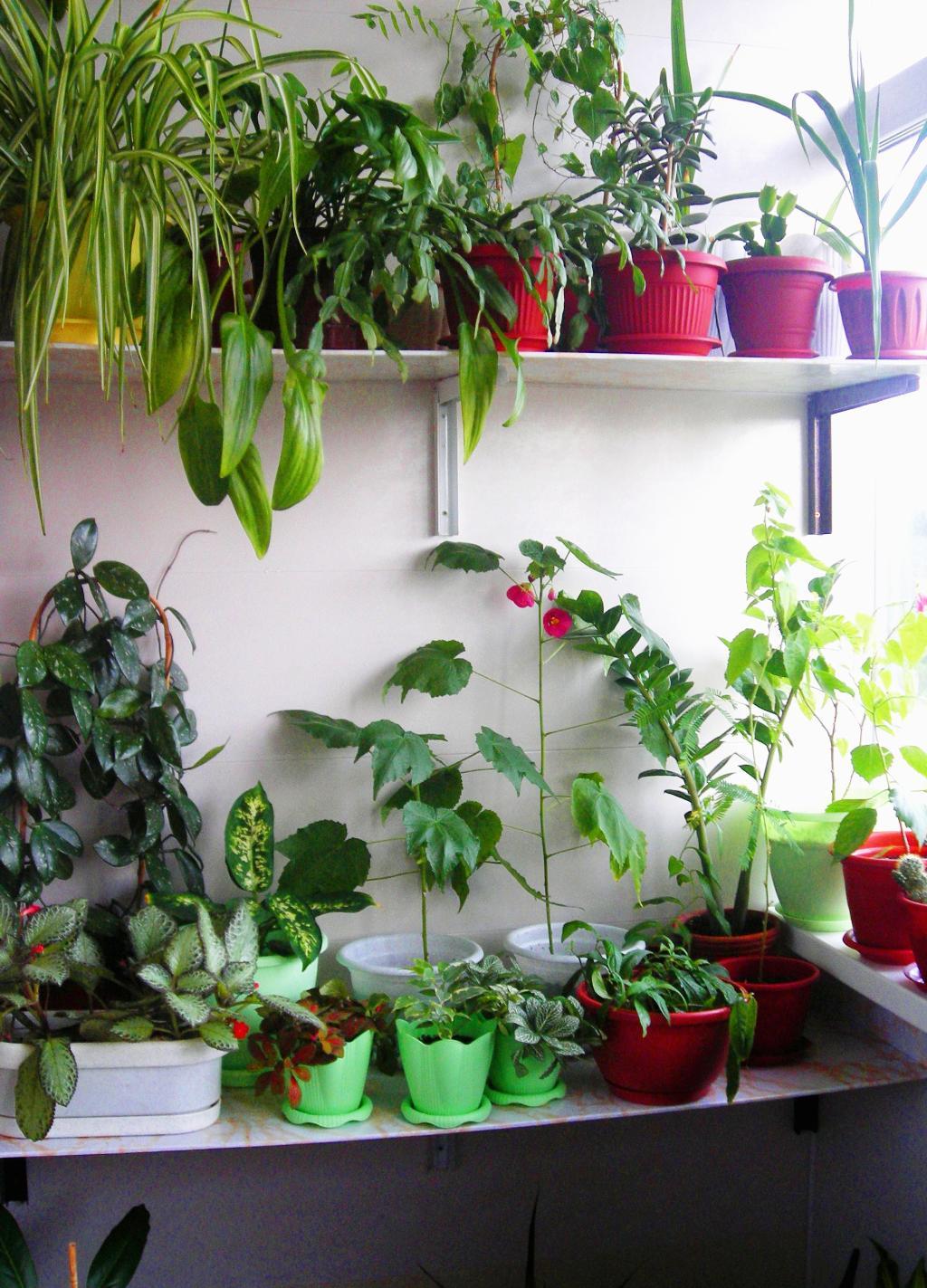 Фотоконкурс блиц домашние растения