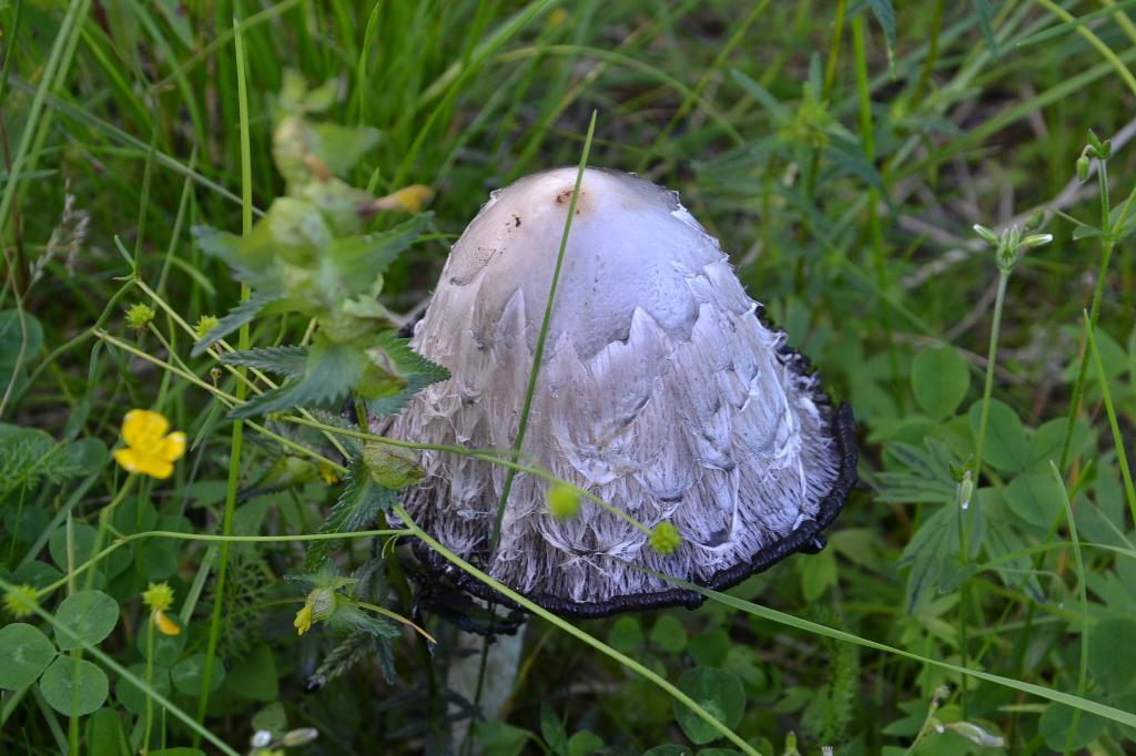 http://photo.7ya.ru/7ya-photo/2012/9/12/1347463825089.jpg