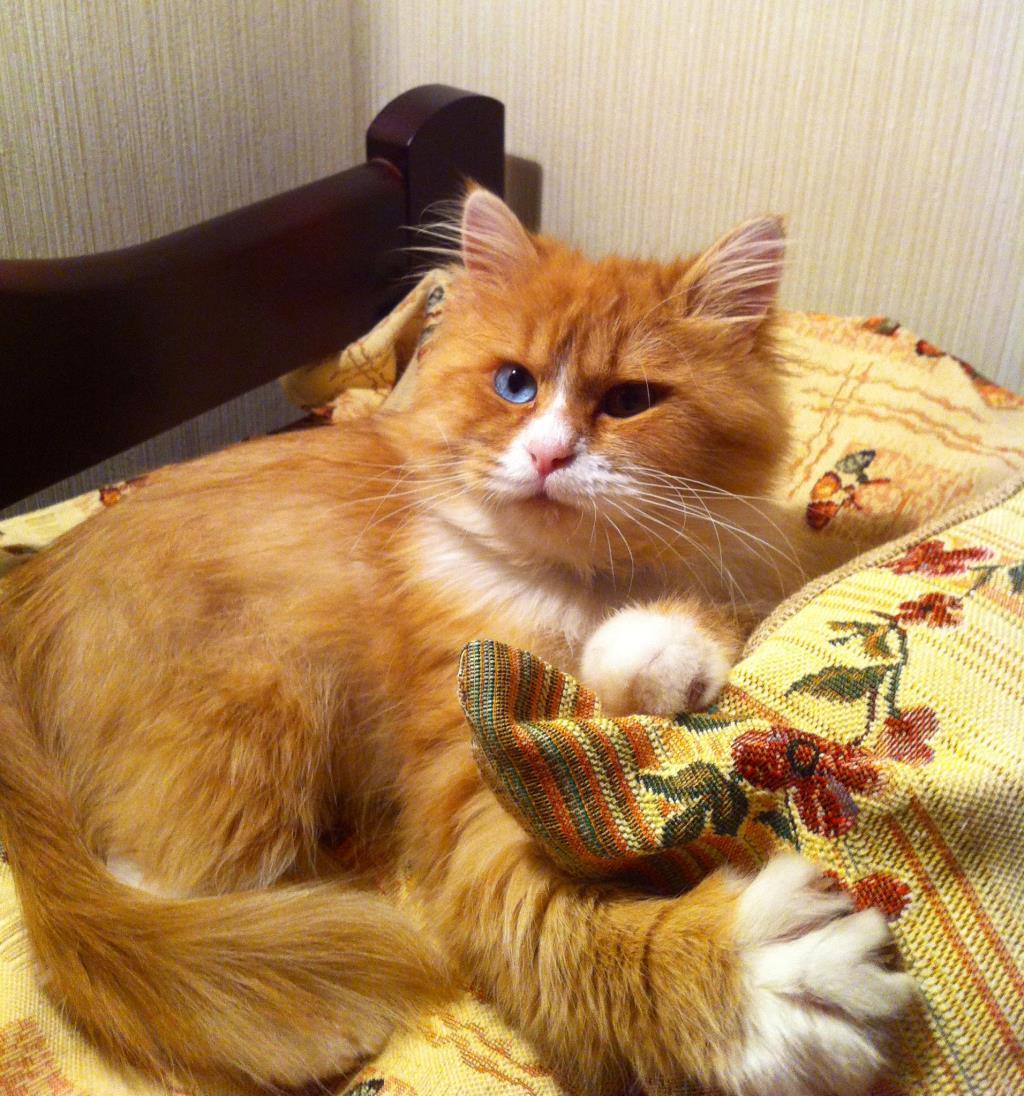 На шее у кота уплотнения