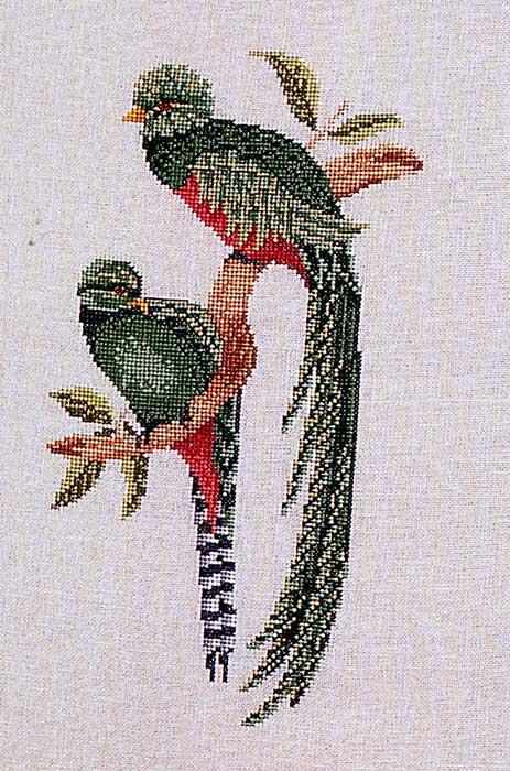 Райская птица вышивка 79
