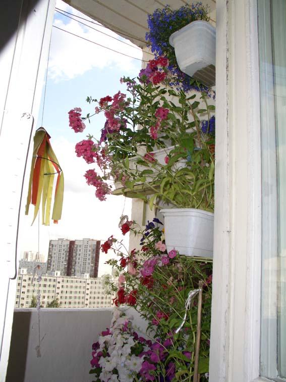 Фото 824462. мой балкон. фотоальбом участника смородинка.
