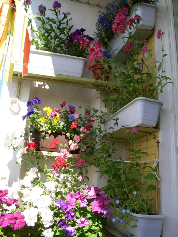 Фото 819929. мой балкон. фотоальбом участника смородинка.