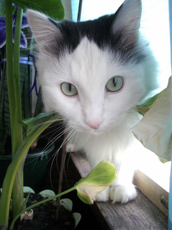 Кот Ваня. Фотыыыыыы