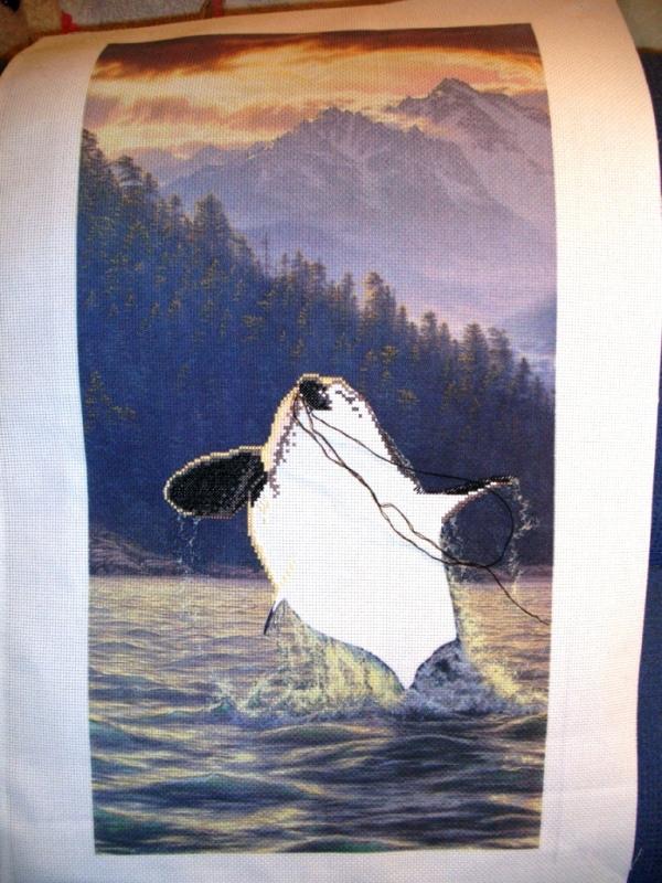 В начале пути. Magnificent Orca - Касатка