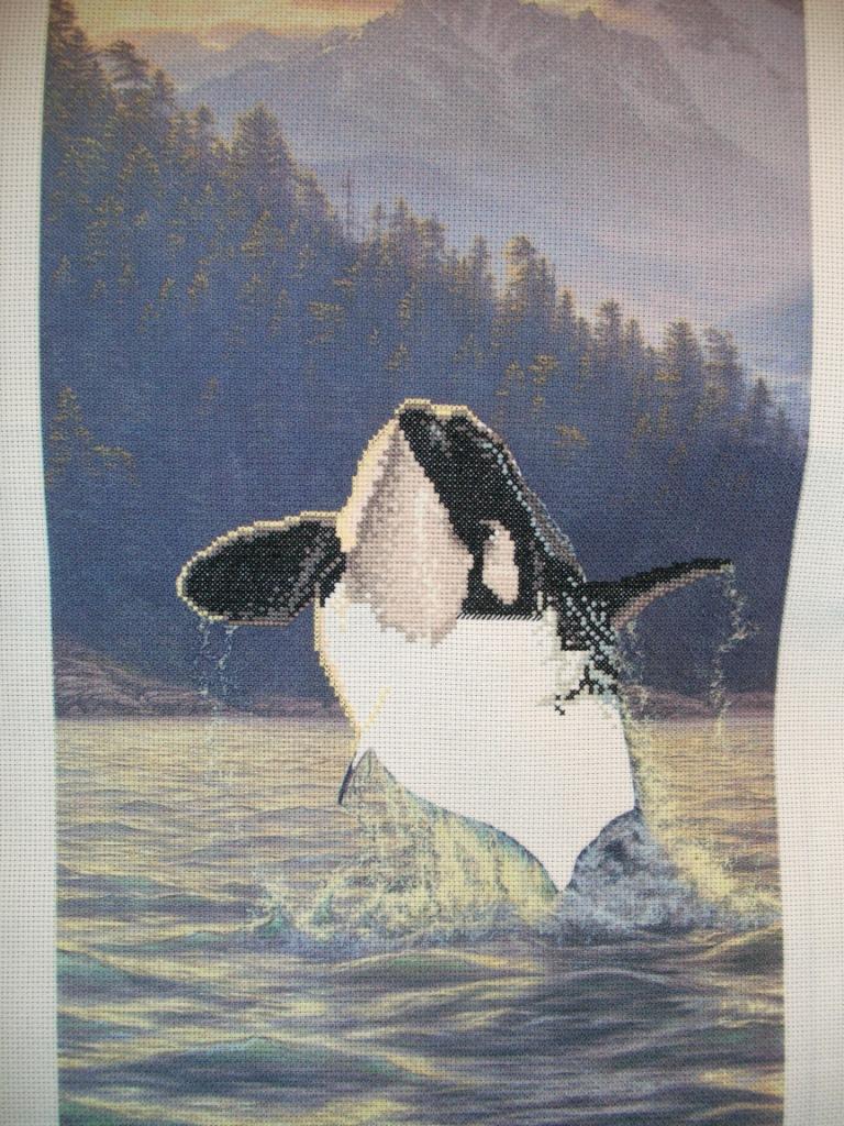 Чуть меньше половины. Magnificent Orca - Касатка
