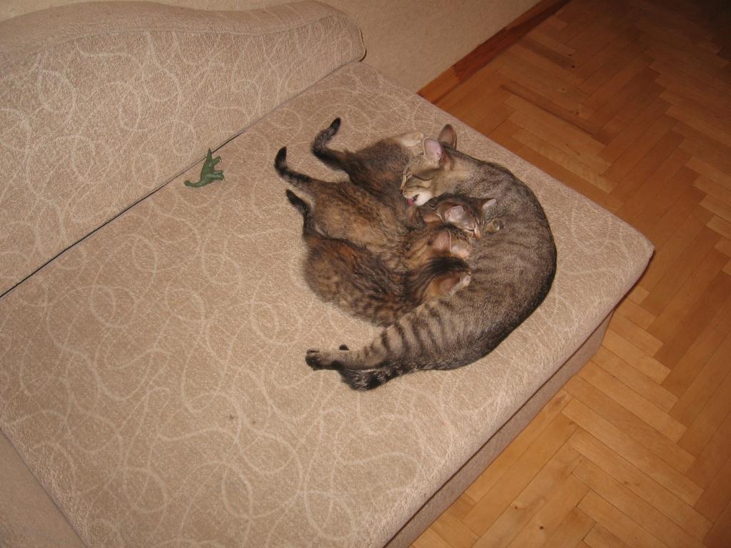 Кошки не похожи на людей кошки это кошки