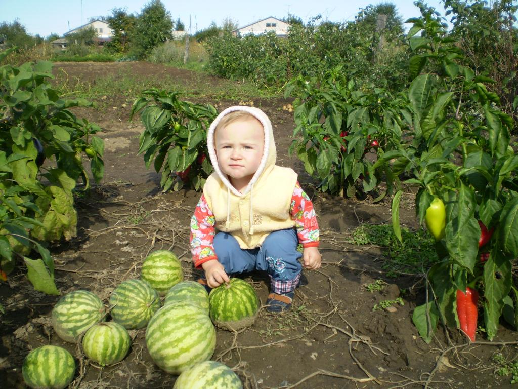 Смотреть онлайн видео сад огород