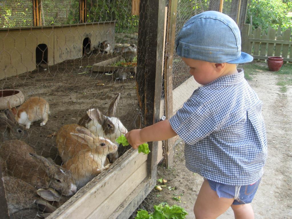 Как кормить кролика маленького в домашних условиях