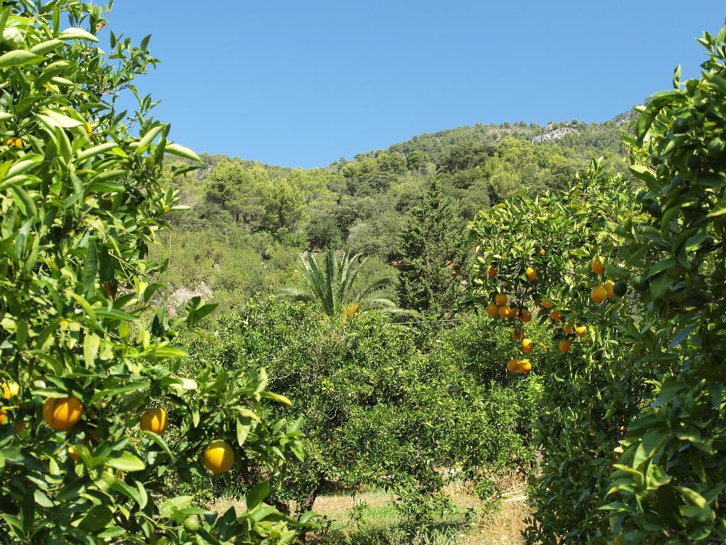 Orange plantation in Novara buy