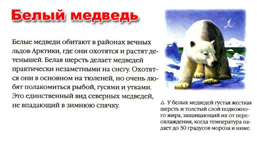 стихи про белых медведей для детей 4-5 лет