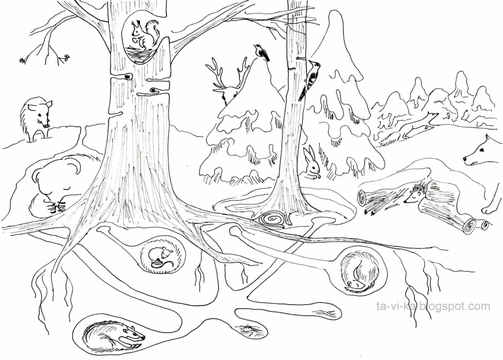 Раскраска в лесу