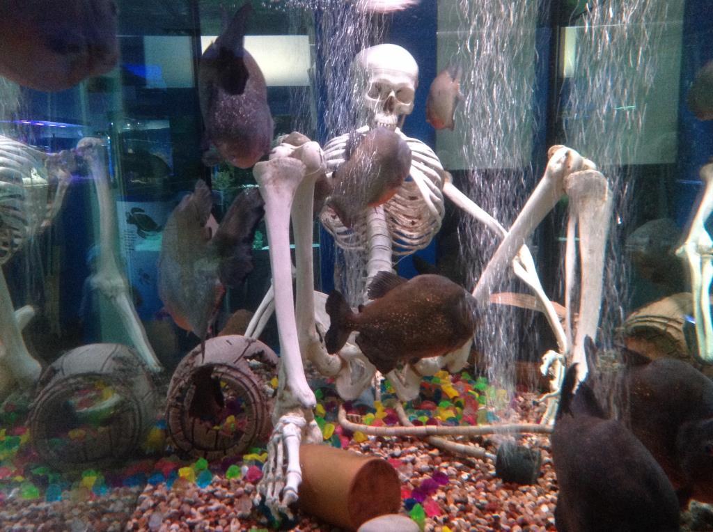 Морской аквариум на Чистых прудах