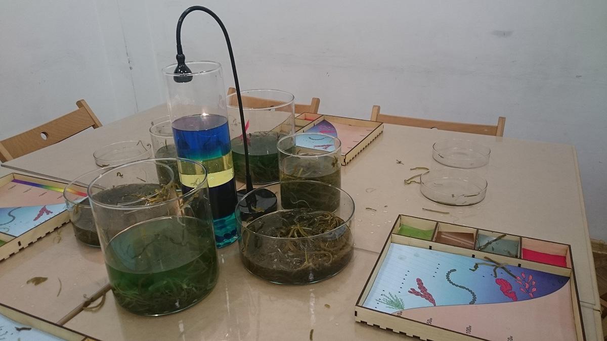 Подводный мир: строение водорослей