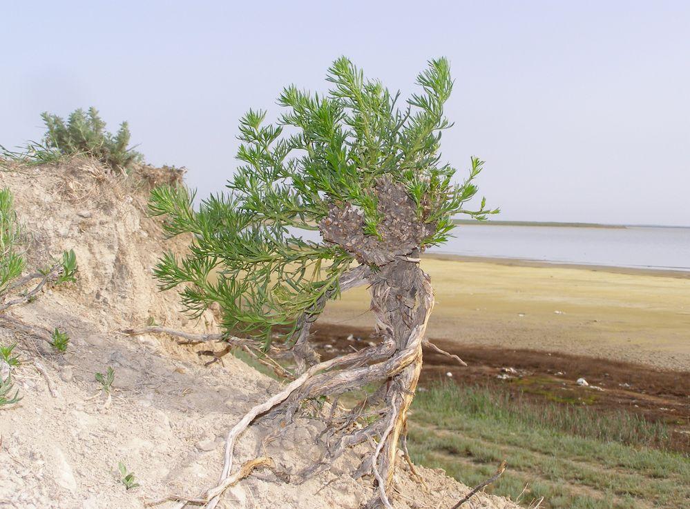 Просыпается природа возле Каркинитского залива.. Блиц: весна