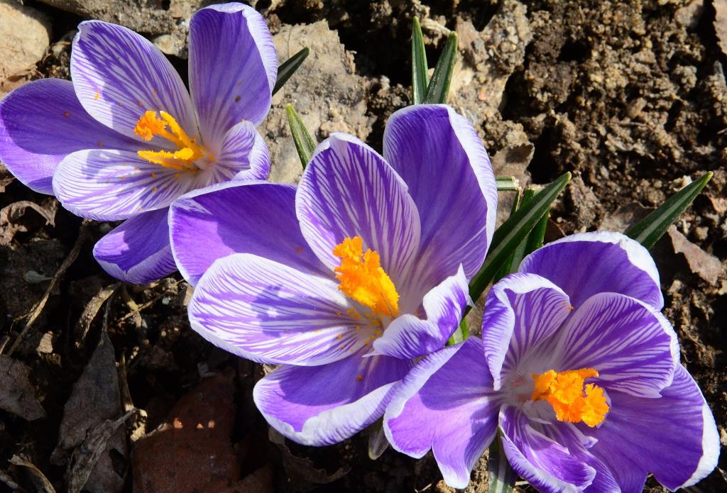 весенние первоцветы. Блиц: весна