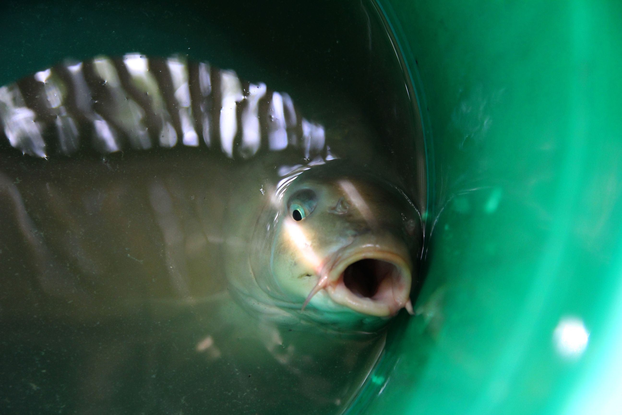 Рыба. Блиц: улов