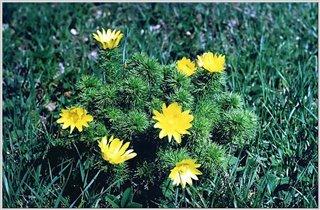 Крымские горные цветы