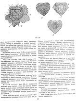 двадцать первая страница