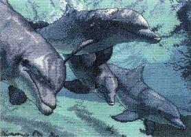 School of Dolphins (Cross My Heart)