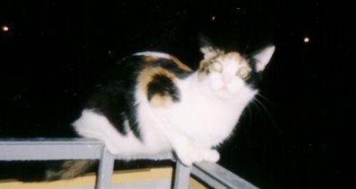 Клёпик в ночи на балконе