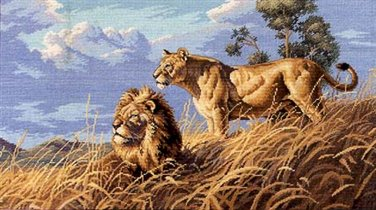 Africans Lions