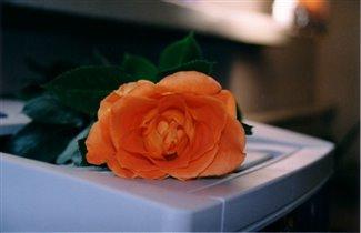 роза и принтер