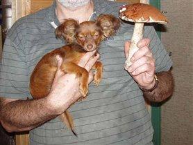 А гриб-то больше:)