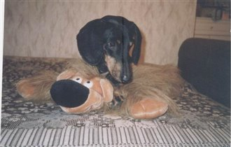 Арчи и медведь :)