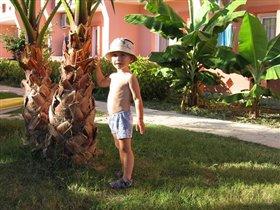 Общипываем пальму