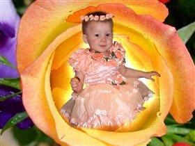 Дарина в розе