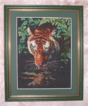 Tiger Reflection - Dimensions