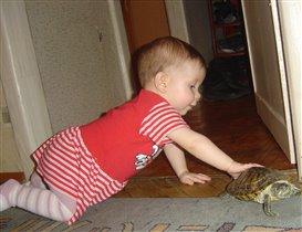 в поле зрения Стаси попала черепаха. ну, держись теперь, черепашка:)
