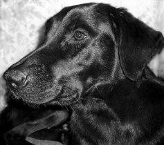 Славный пёс.