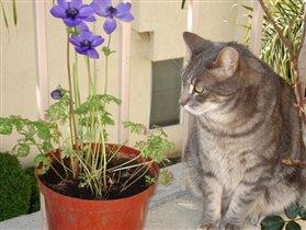 Мой кот Марко Поло на балконе среди моих цветочков.