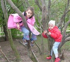 Дети на дереве