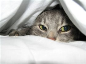 Пират любит спать под одеялом:)