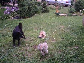 Собаки 3 штука