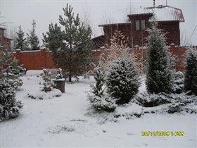 сад, покрытый первым снегом