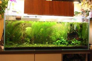мой аквариум сегодня
