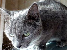 Моя кошка Джина1