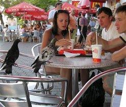 голуби выбирают... макдональдс?