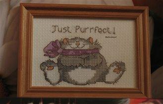 Котя в подарок