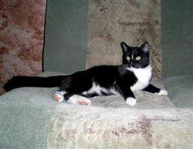 Лиза на диване