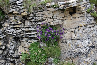 И на скалах растут цветы