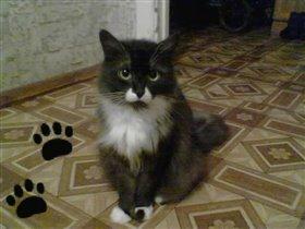 Моя любимая кошка Фроська