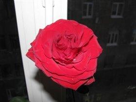 Самый маленький мужчина в моей жизни подарил мне цветок на 8 марта!